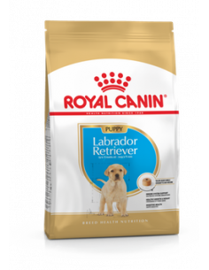 LABRADOR JUNIOR 12KG ROYAL CANIN