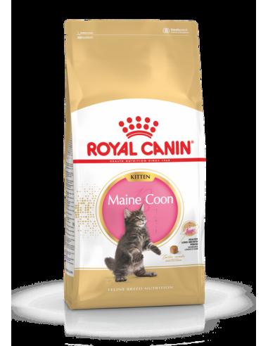 MAIN COON KITTEN  ROYAL CANIN