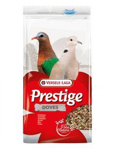 Prestige pigeon-tourterelle