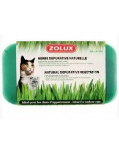 Zolux herbe à chat depurative 250g