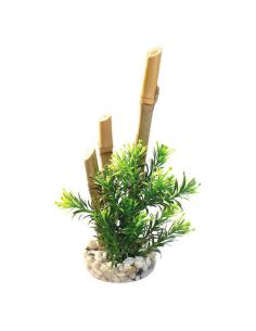 SYDECO Bamboo plantes