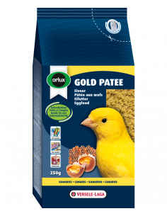 GOLD PATEE CANARIS