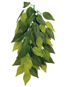 Plante tissu à suspendre, Ficus